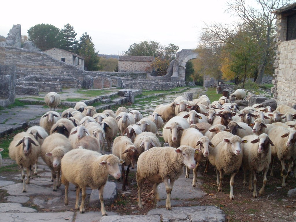 The ancient city of Saepinum is still used by local shepherds!