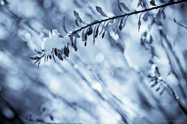 Iced bokeh - Frosty mornings II