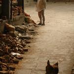 Why Did the Chicken Walk Down the Alley? Kathmandu, Nepal