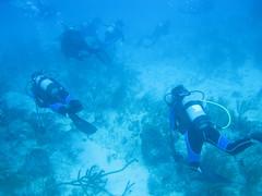 Scuba Diving - Cuba (26)