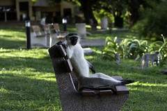 Hola bokkie, come sit with me