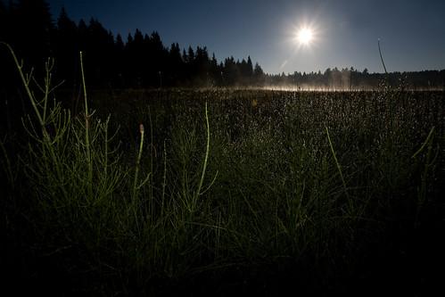 misty fog sunrise switzerland twilight swiss foggy pines jura etangdelagruère