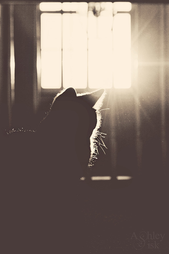 Morning Kitty Silhouette
