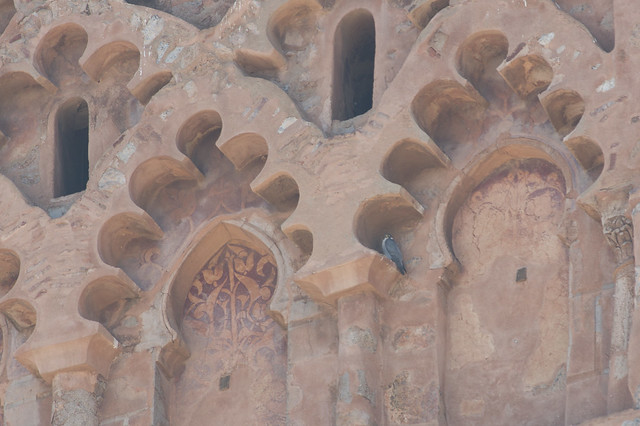 Peregrine on Koutoubia Mosque