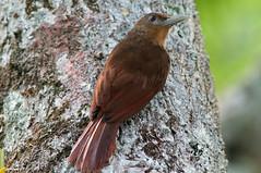 nightingale(0.0), robin(0.0), sparrow(0.0), european robin(0.0), branch(0.0), finch(0.0), blackbird(0.0), wren(1.0), animal(1.0), ortolan bunting(1.0), nature(1.0), fauna(1.0), close-up(1.0), emberizidae(1.0), beak(1.0), bird(1.0), wildlife(1.0),