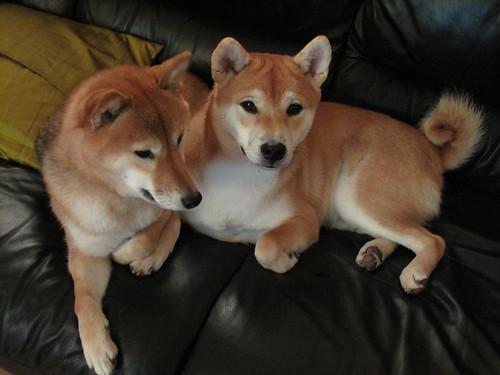 A lazy Shiki and Hoshi Shibamas