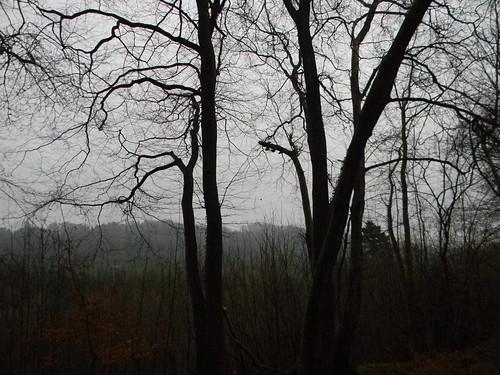 trees 'n' view