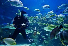 Solitary Islands Scuba Diving