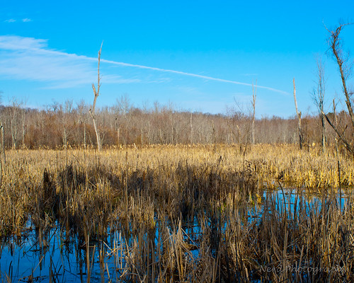 water forest canon outdoors wildlife alabama wheeler refuge