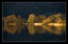 TREE REFLECTIONS, GRASSMERE, LAKE DISTRICT