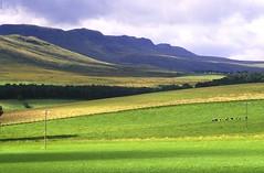 Stirling Landscapes