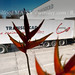 Translocad PME de transport