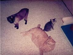 BOUTOT CATS