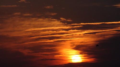 sky seagulls nature clouds sunrise river wildlife conservation ducks vietnammemorial shipping oilrefinery wildbirds riverport frieghters marcushookpa delawareriverpa cpljohnfstockman