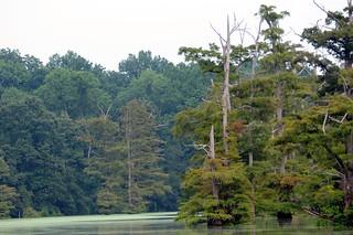 Cooks Lake