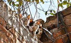 Cat, cat ,cat
