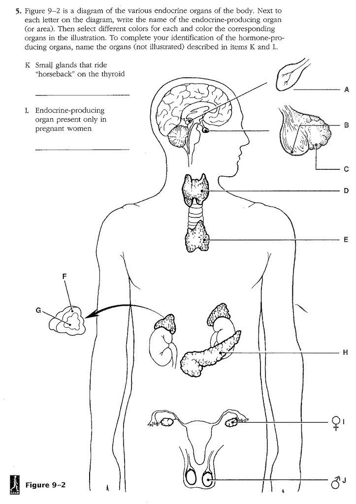 unit 6 endocrine system diagram. Black Bedroom Furniture Sets. Home Design Ideas