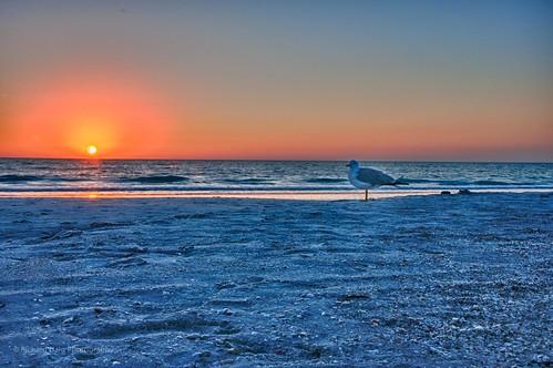 sunset reflection beach gulfofmexico water seagull fl stpetebeach nikond90
