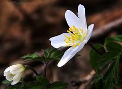 ~~Fleur de printemps~~