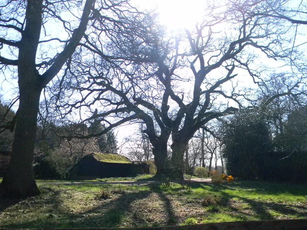 Big tree, mossy building Farnham to Godalming