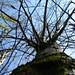 Naked Tree (درخت برهنه)