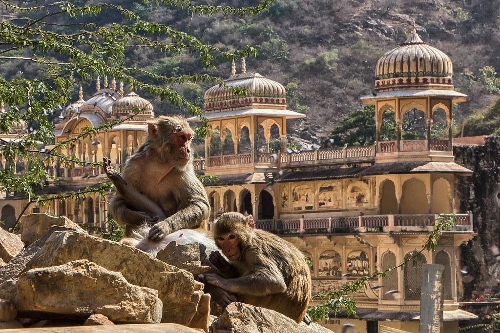 Galta Monkey Temple