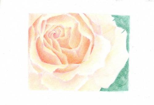 2011_02_13_rose_06