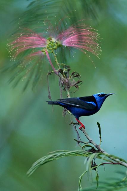 Costa Rica February-March 2011