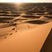 Camel Caravan Returning: (erg Chebbi)