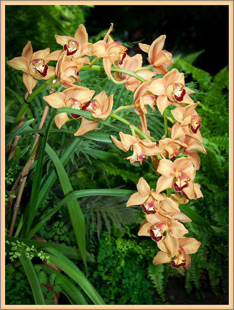 New Botanical Garden Orchid Show March 19 2011 By