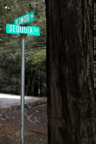 corner of redwood dr & sequoia dr in la honda, california