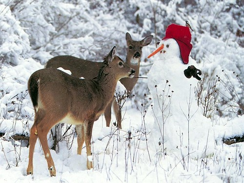 Deer_with_Frosty