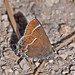 Thicket Hairstreak - Photo (c) Jerry Oldenettel, some rights reserved (CC BY-NC-SA)