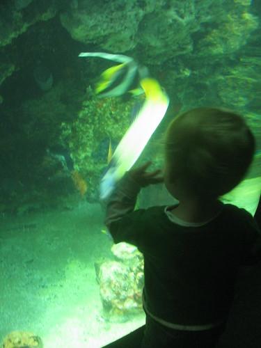 Will Watching Fish