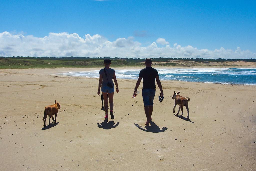Punta del Diablo walking dogs