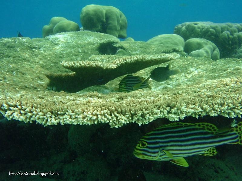 Кораллы для рыб - залог жизни