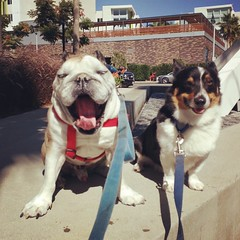 Frankie & Austin