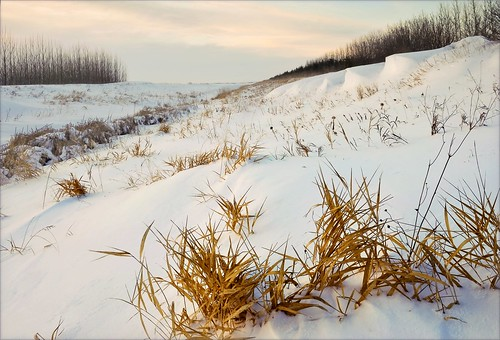 . prairie winter .