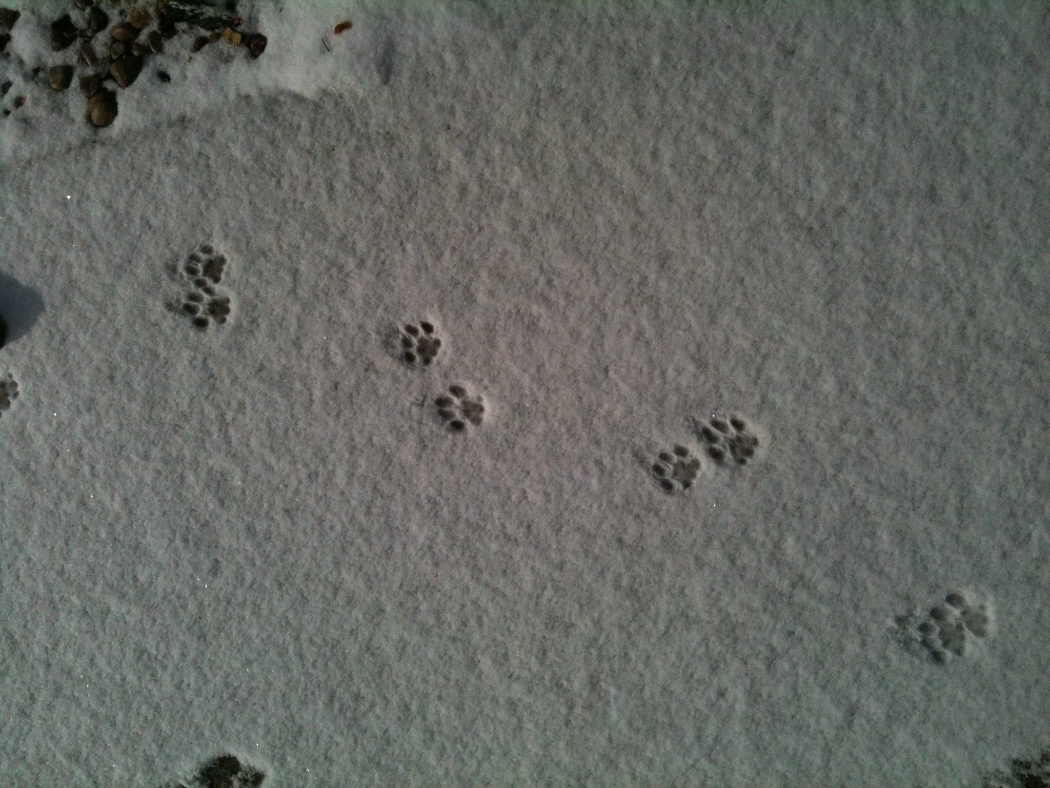 Make A Snow Dog Puppet Brownies