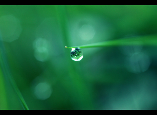Water Drop Refraction   Flickr - Photo Sharing!