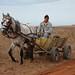 Bulgarian horse and cart (David Morris)