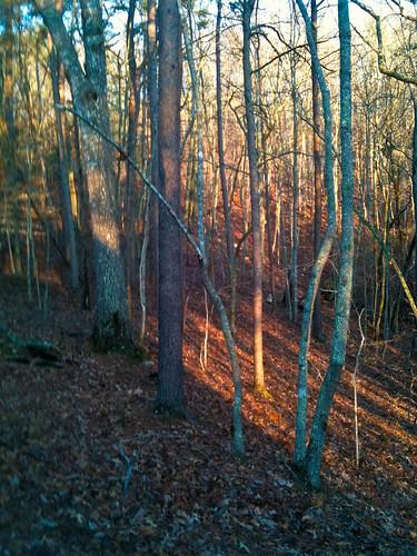 winter landscape backyard places lakearrowhead
