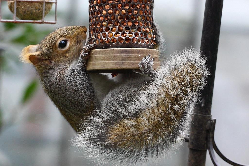 Image result for Squirrel Proof Bird Feeder flickr