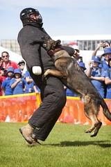 5551748077 dbf6e05d84 m The Military Working Dog Foundation