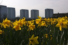 Daffodil Towers