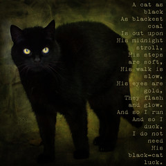 A cat as black ....