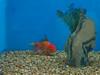 tropical-fish-coral-custom-tank-aquarium-sarasota-fl-9