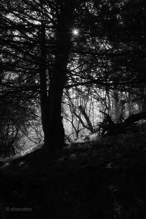 September in the woods