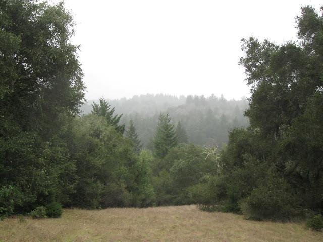 Fog / cloud