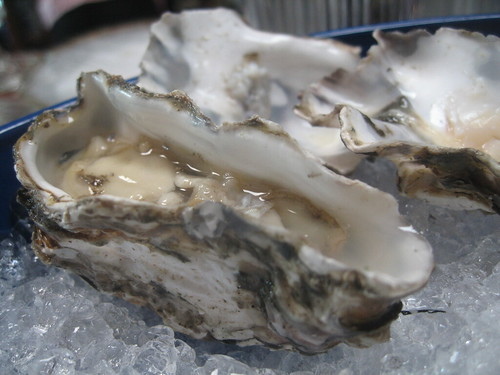 Yaquina Oyster